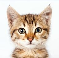 assurance sante pour chat